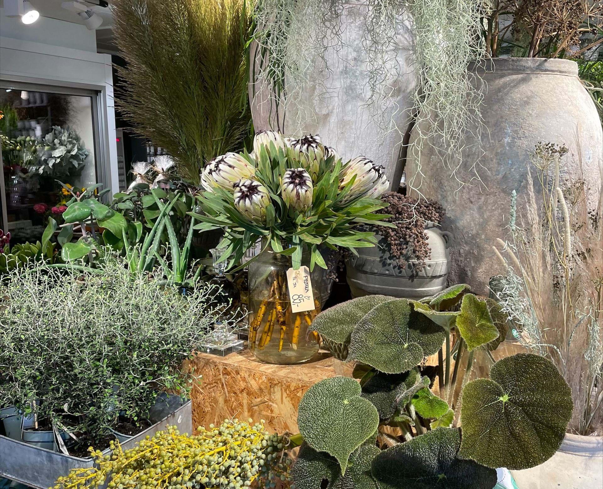 Potter med planter i står på reoler i butikken